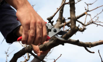 Tree Pruning in Cape Coral FL Tree Pruning Services in Cape Coral FL Quality Tree Pruning in Cape Coral FL