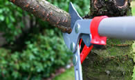 Tree Pruning Services in Cape Coral FL